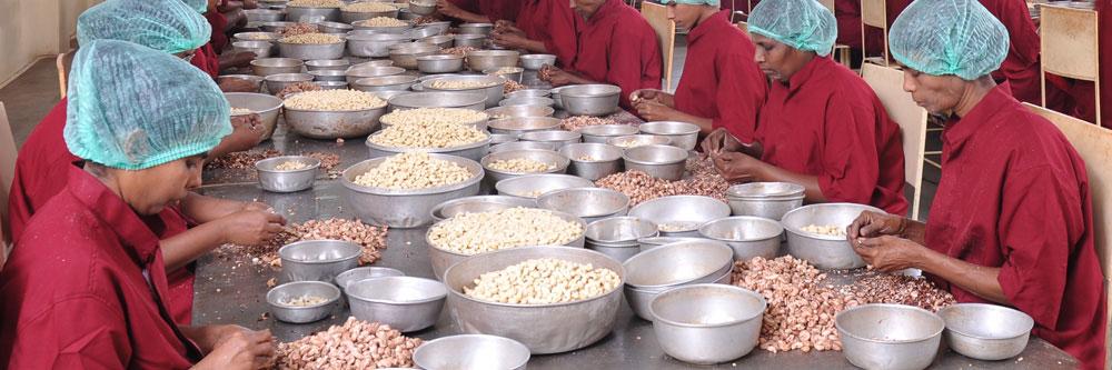 Kerala Nut Food Co - Cashews, Nuts, Kernels, Cashew nuts